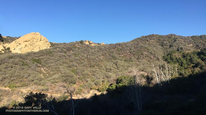 Eagle Rock and Eagle Springs Sycamores