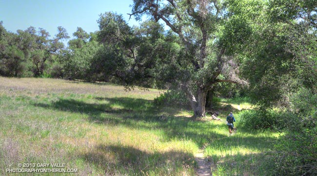 Forbush Canyon Trail in the Santa Barbara Back Country