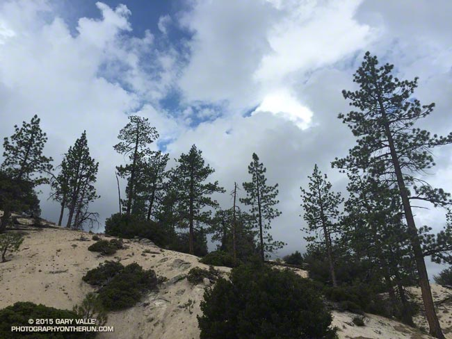 Pines and clouds in the San Gabriel Mountains