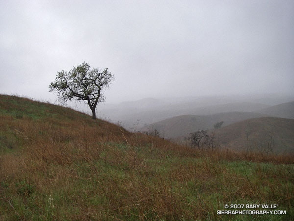 March showers in Upper Las Virgenes Canyon Open Space Preserve (formerly Ahmanson Ranch).