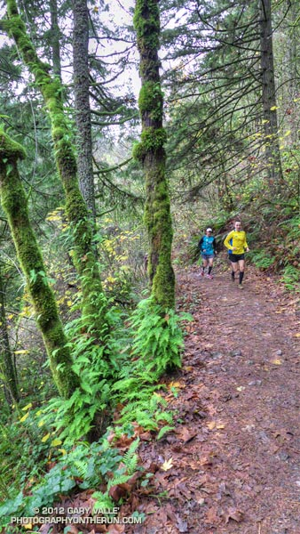 Runners on the Wildwood Trail