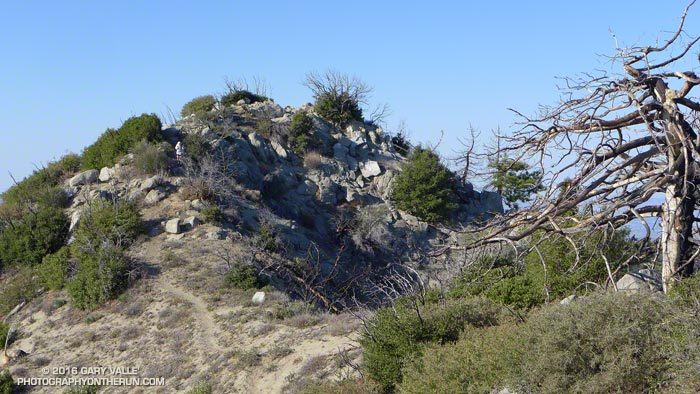 Chaparral regrowth near the summit of Strawberry Peak