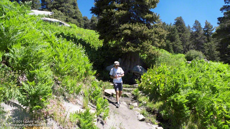 Lush growth at the springs at Wellman Cienega about 0.6 mile below Wellman Divide, and on the way to Saddle Junction and Tahquitz Peak.