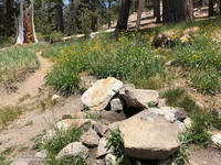 The North Fork Trail and small spring at Sheep Camp.