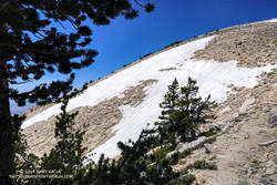 Large patch of snow on the Sky High Trail at an elevation of about 11,100' on July 27, 2019.